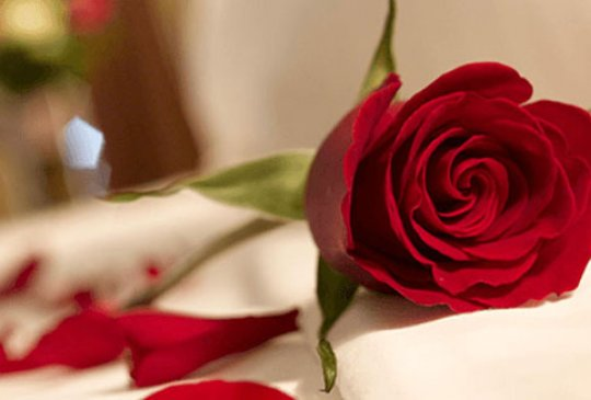 Free Roses on Valentine's Day Yacht Charter